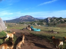 The newly fenced Dog Park area. Guests LOVE it!